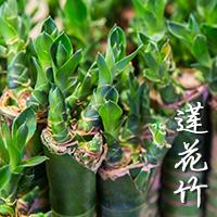 Lotus Bamboo