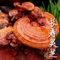 Mushroom Of Longevity